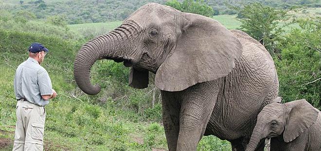 The Elephant Whisperer crop