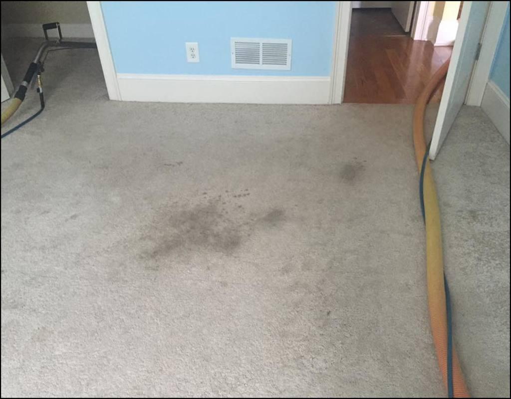 Athens Ga Carpet Cleaning