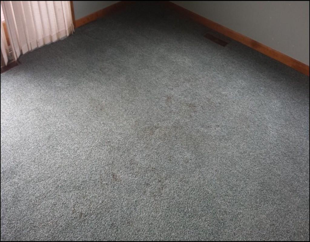 Carpet Cleaning Lansing Mi