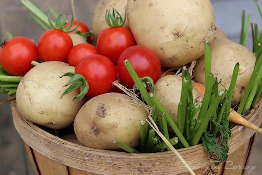 fresh from the garden photo by Tori Beveridge