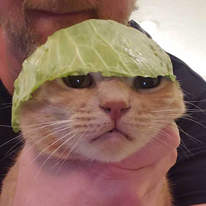 Because cats and cabbages