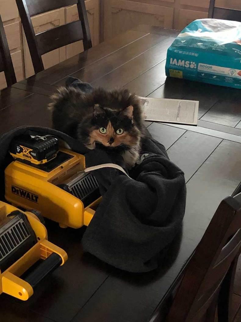Taxidermist monitors the power tools