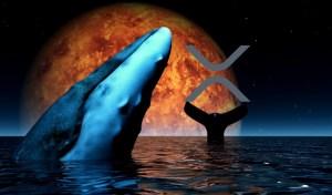Крипто-китове прехвърлят милиони в XRP, а търсенето на криптовалутата в Гугъл експлодира до рекордно високо ниво
