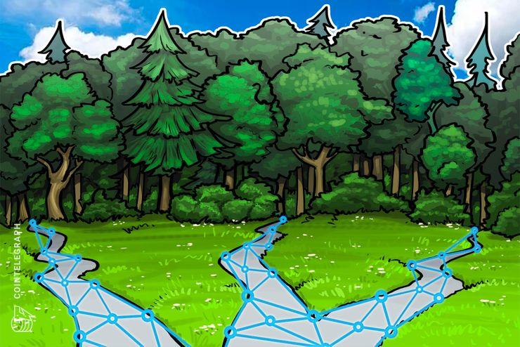 مقاطعة صينية تنشئ شركة بلوكشين لتطوير الصناعة الغابات