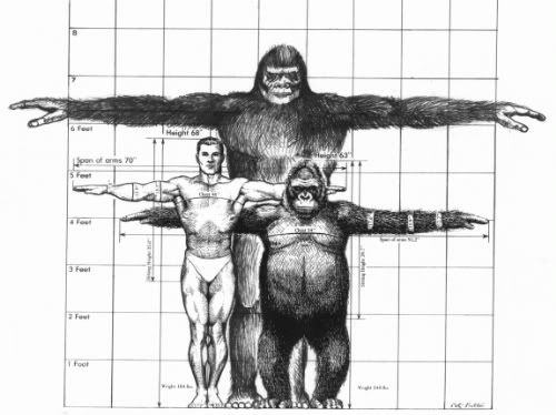 Image result for Gigantopithecus blackii