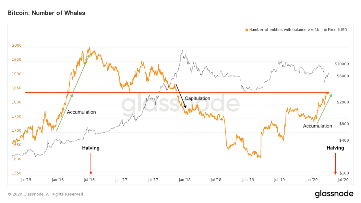 Bitcoin Whales / Bitcoin Price. Source: insights.glassnode.com