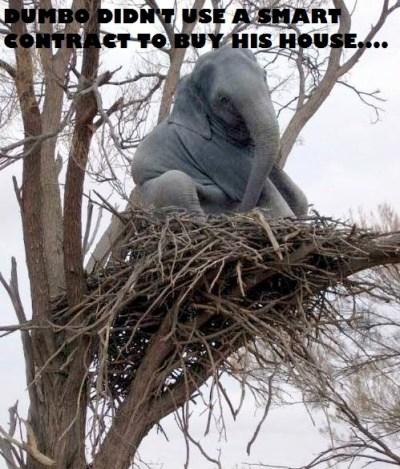 elephant_in_tree