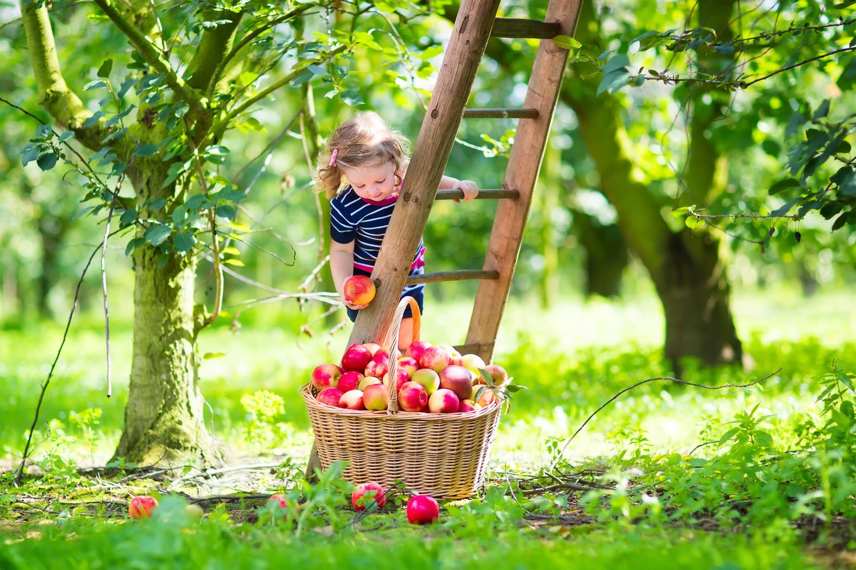 Apple Preschool Activities
