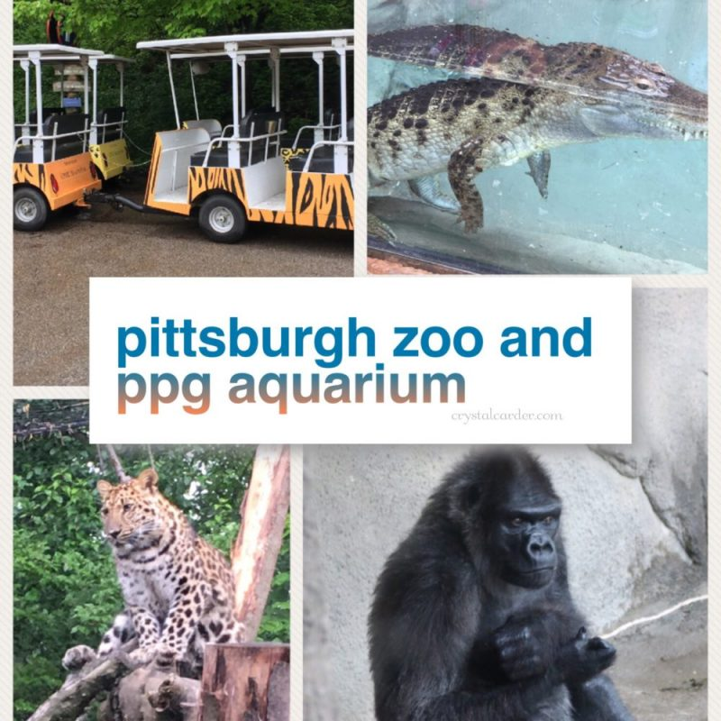 The Most Fun We've Had In Pittsburgh At The Pittsburgh Zoo And PPG Aquarium