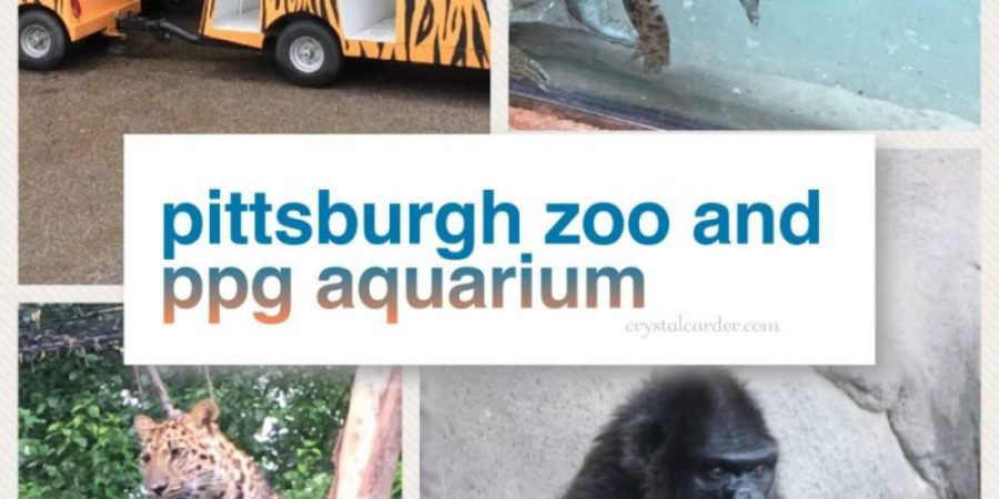 Pittsburgh Zoo and PPG Aquarium Review