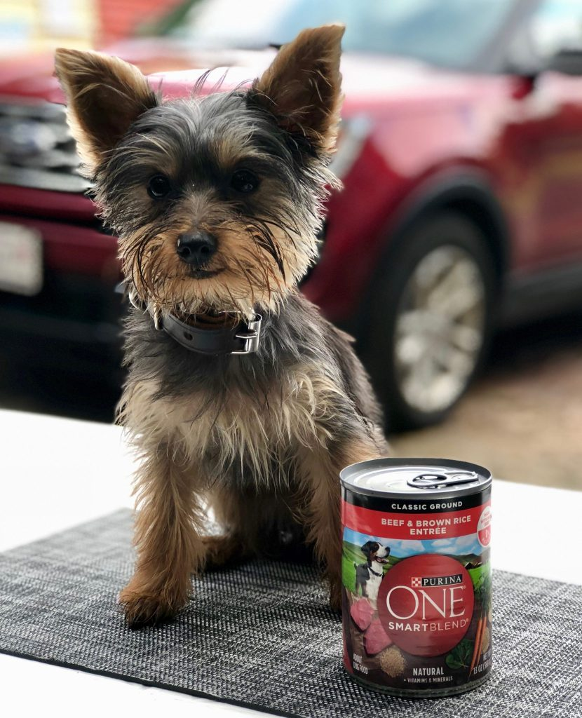 ad Purina ONE® At Target is the one of the only foods I trust for my Teddy