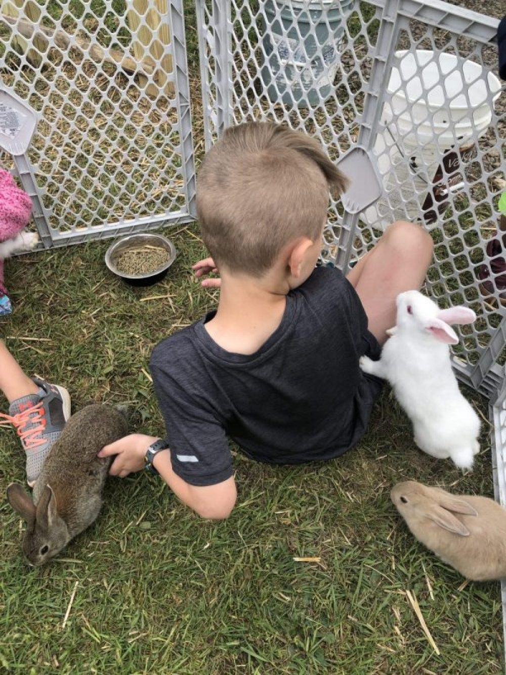Rabbits for kids, everything you should know