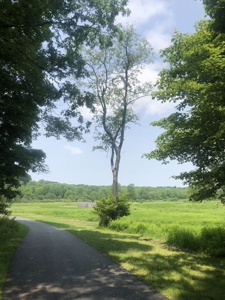 A peaceful walk to fort necessity