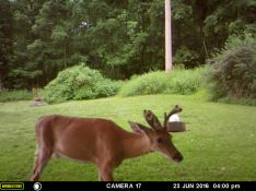 MR. BUCK HAMMING IT FOR THE CAMERA.