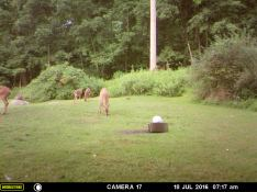 DEER AND EATING WITH A RABBIT.