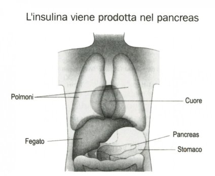 Insulina pancreas