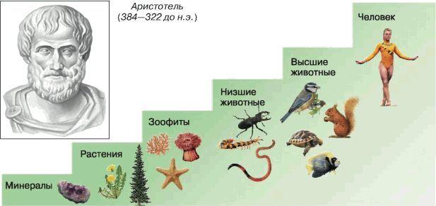 Istoric și raportul diferitelor teorii ale evoluției științei globale organice, evoluția, Charles Darwin, interesant, Vavilov, Berg, Istorie, Review, Știință și Religie, Andrey Lysenko, Popularizare, Punctul lung, Biologie