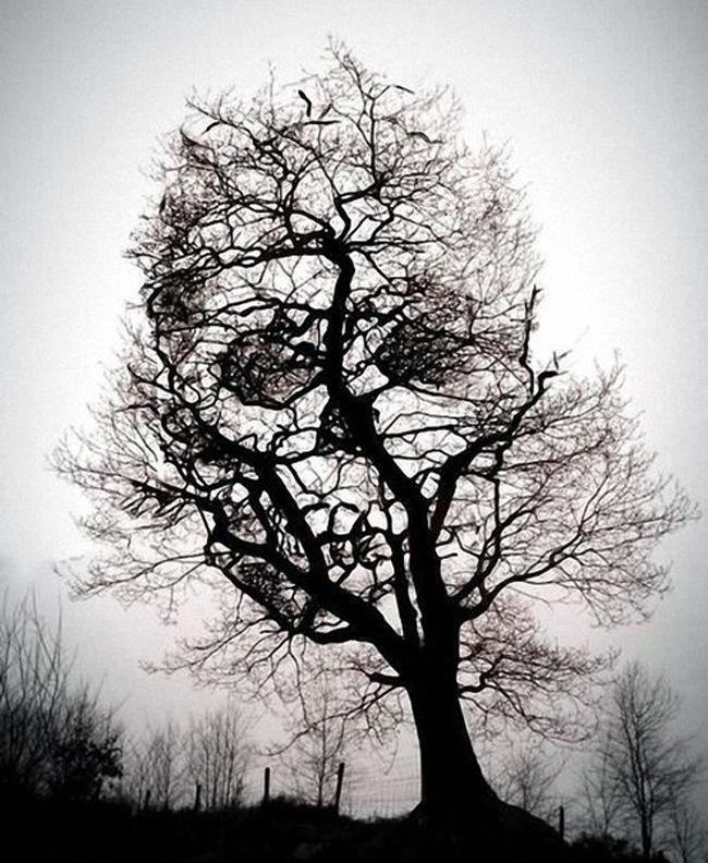 Самые необычные и удивительные иллюзии, созданные природой, фото № 32