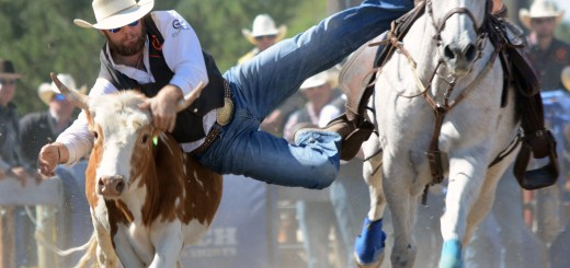 Central Wyoming College's Teigen Finnerty, freshman of Wheatland, Wyoming, jumps off his horse onto a steer Friday during the steer wrestling event at the CSC's rodeo hosted at the Dawes County Fairgrounds. —Photo by Jordyn Hulinsky