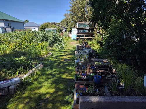 garden back view