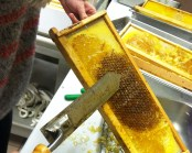 Uncapping honeycomb
