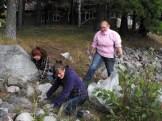Removing invasive plants