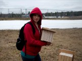 Houses for native bees