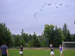 A flock of geese circled the field a number of times.