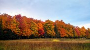 Colorful trees lining the field above Inkpot Lake