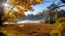 Morning bog fog