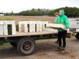 Liz moving seedlings at the nursery