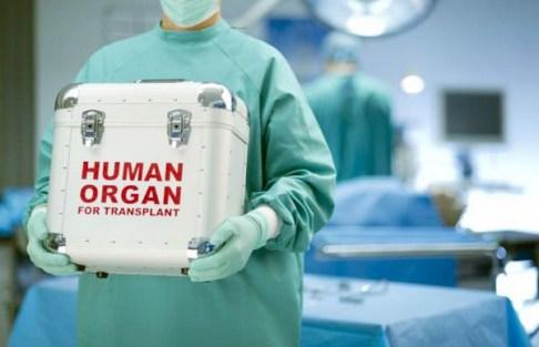 transplant-organe