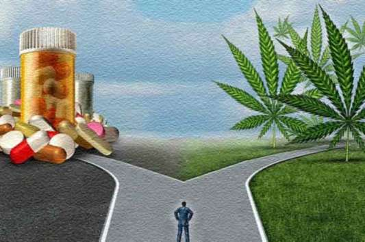 Image result for Big Pharma Is Synthesizing Cannabis To Make A Patent-able Pill And It's Killing People