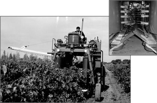 A Chisholm-Ryder mechanical grape harvester in operation