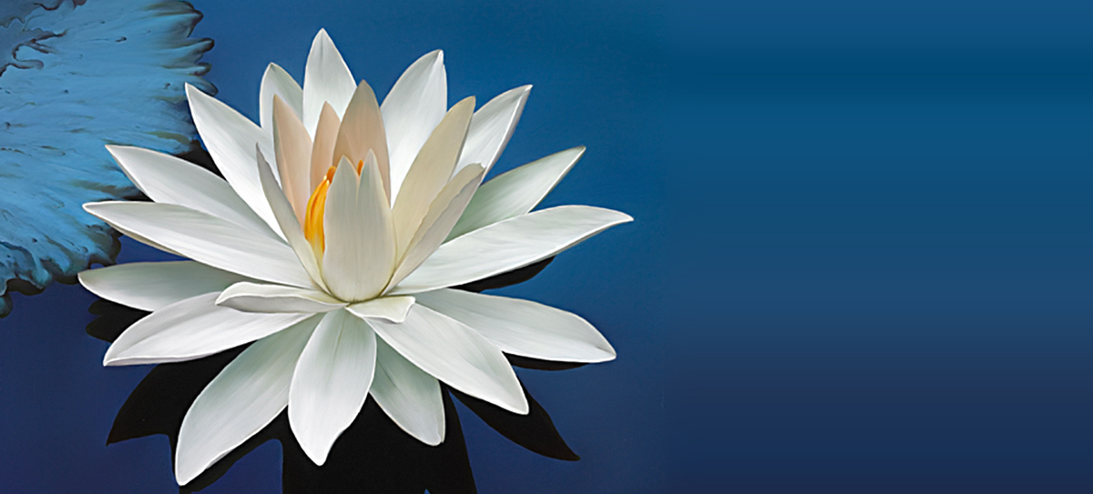 lotusThin