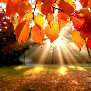 Sunshine through Autumn Leaves