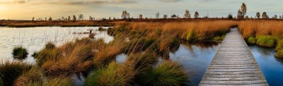 Alligators and Swampland