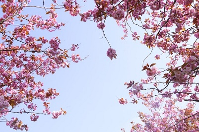 Easter - Spring and new beginnings
