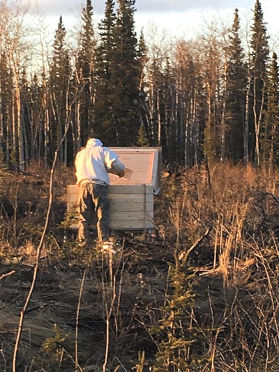 CLEAR AIR FORCE STATION, Alaska – Tech. Sgt. James Campbell, Alaska Air National Guard 213th Security Forces Squadron, works with one of his bee hives at Clear Air Force Station. Campbell's hives are designed much thicker than usual this year to keep them going through the winter.