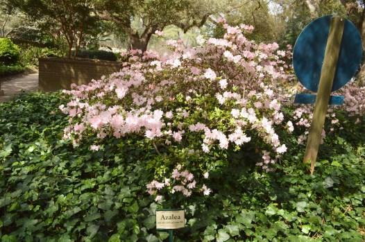 hopeland garden 5