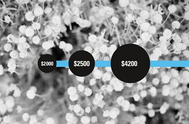 wordpress-earnings