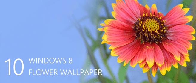 Desktop Wallpapers 10 Free HD Flower Wallpaper For Windows8
