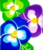 Pansy Trio Flowers2