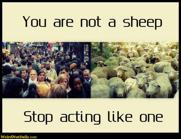 Image result for image of people as sheep