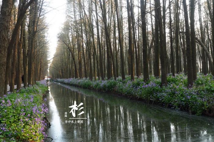 江南-泰州興化 李中水上森林,攝影人的天堂!徜徉在杉林間的一段奇幻漂流~