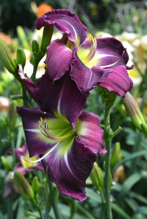 pat-sayers-whispering_purple_frog_prince_001