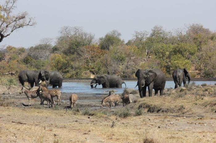 olifanten in de waterpoel