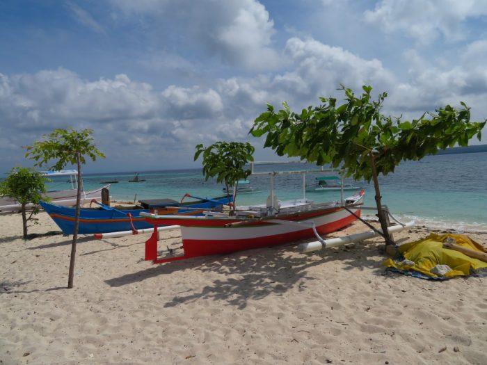 twee boten op het strand bij boom
