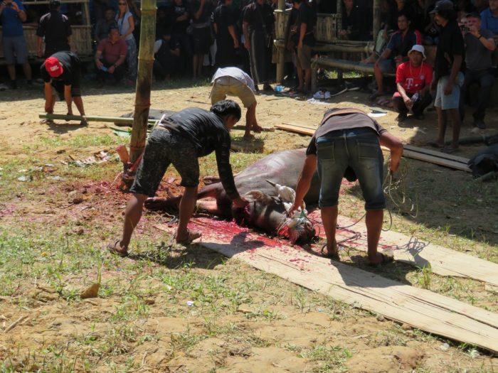 Twee mannen hebben waterbuffel gedood