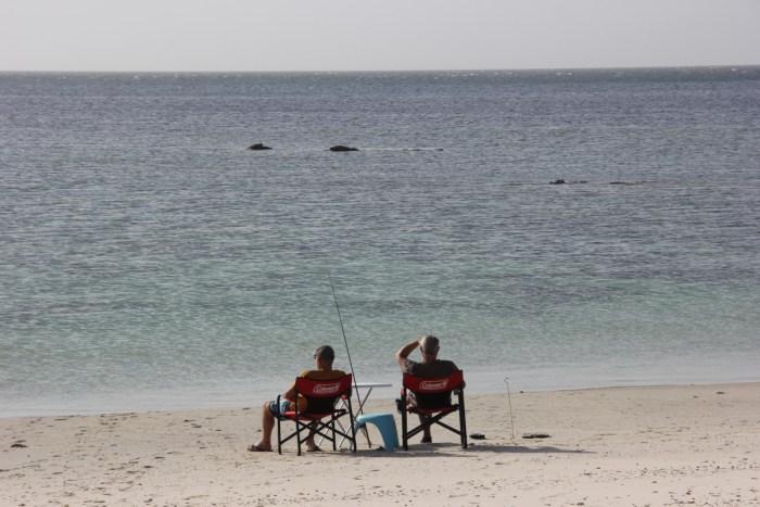 vissen op Masirah Island